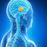 סרטן מוח - טיפול בעזרת הומאופתיה